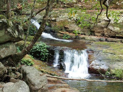 rainforest-4724580_1920.jpg