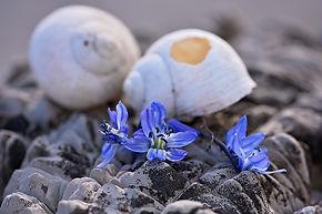 CsigaEmpty-Snail-Shell-Damaged-Broken-Sh