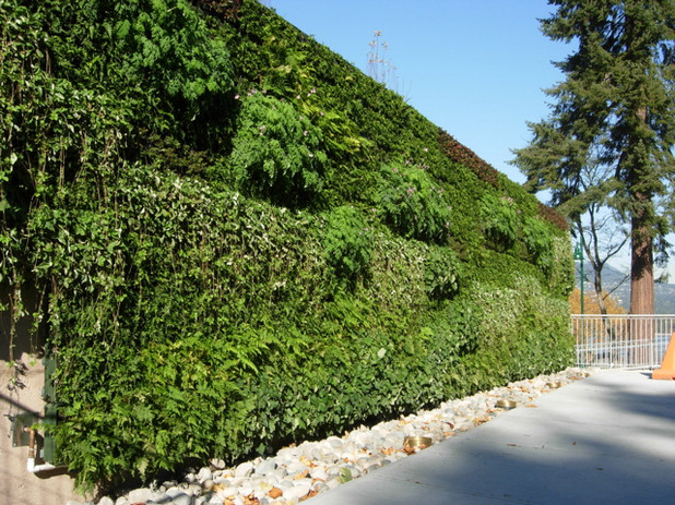 Green Wall Vancouver copy.jpg