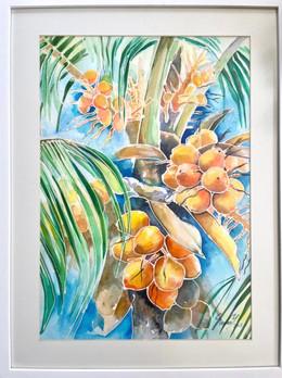 Orange Coconut Tree