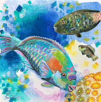 Orange-blotch-Parrotfish-Family
