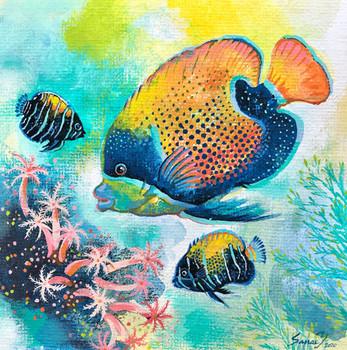 Bluegirdled-angelfish-Family