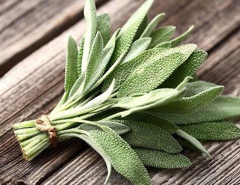 Aromatiche - Salvia