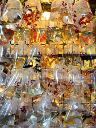 Goldfish Market - Mongkok