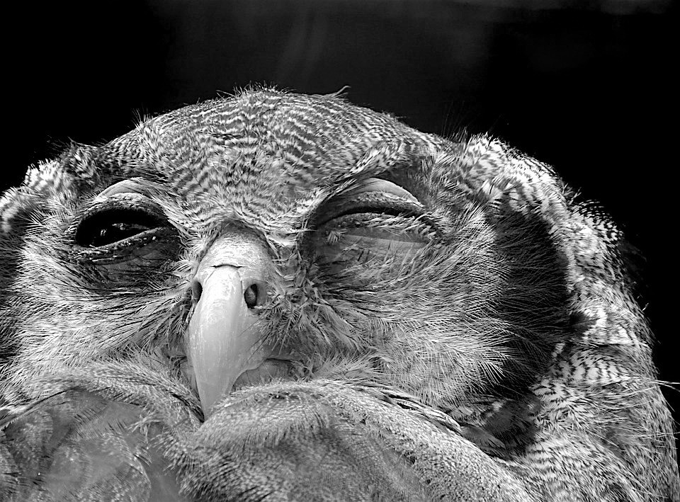 An owl or a visual representation of stress... you choose!