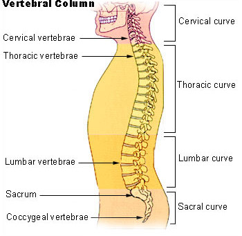 Physical Therapy for Low Back Pain from Lumbar Spinal Stenosis
