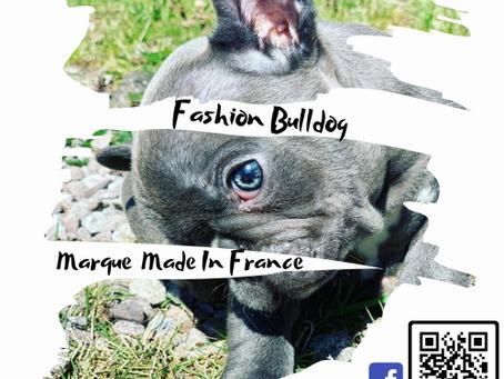 Ouverture du Blog Fashion Bulldog