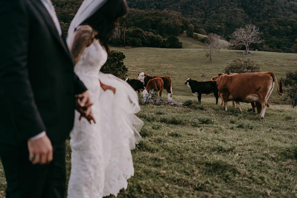 Cowbell-Creek-Wedding-Gold-Coast-Wedding-The-Love-Archives
