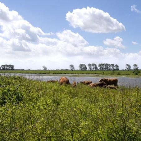 Fietsroute Rondje Biesbosch: water, dijken, de camargue en waterbuffels