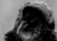 crow jpg.png