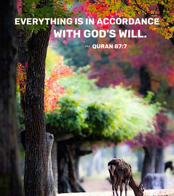 Everything is in accordance with God's will. ~ Quran 87:7
