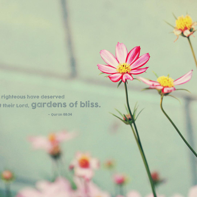 The righteous have deserved, at their Lord, gardens of bliss. ~ Quran 68:34