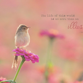 The life of this world is no more than an illusion. ~ Quran 3:185
