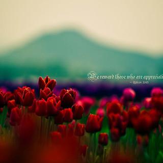 We reward those who are appreciative. ~ Quran 3:145