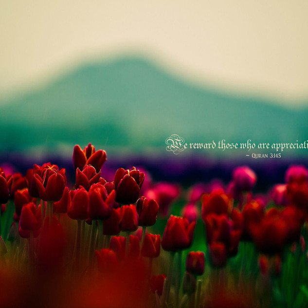 We reward those who are appreciative. ~ Quran 3:145