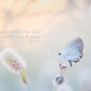 Nothing is hidden from God, in the earth or in heaven. ~ Quran 3:5