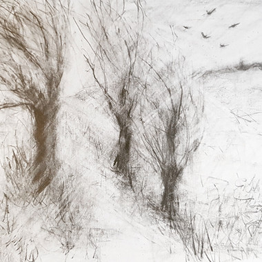 Trees in graphite