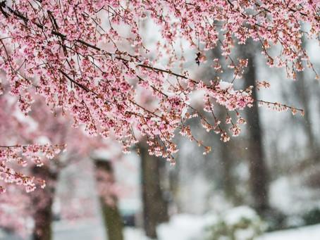 Floreciendo Entre La Nieve