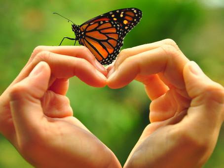 Tus alas están en tu corazón.