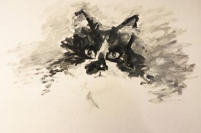 Catfé Cat
