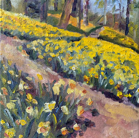 Beth's Daffodils