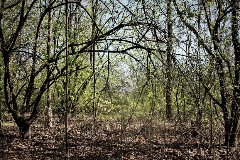 Il bosco magico