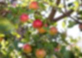 Belles-Exterior-2.jpg