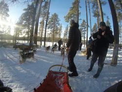 dog sledding4