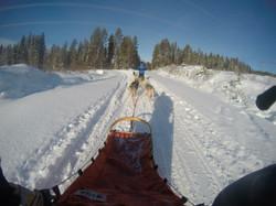 dog sledding5
