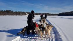 dog sledding11