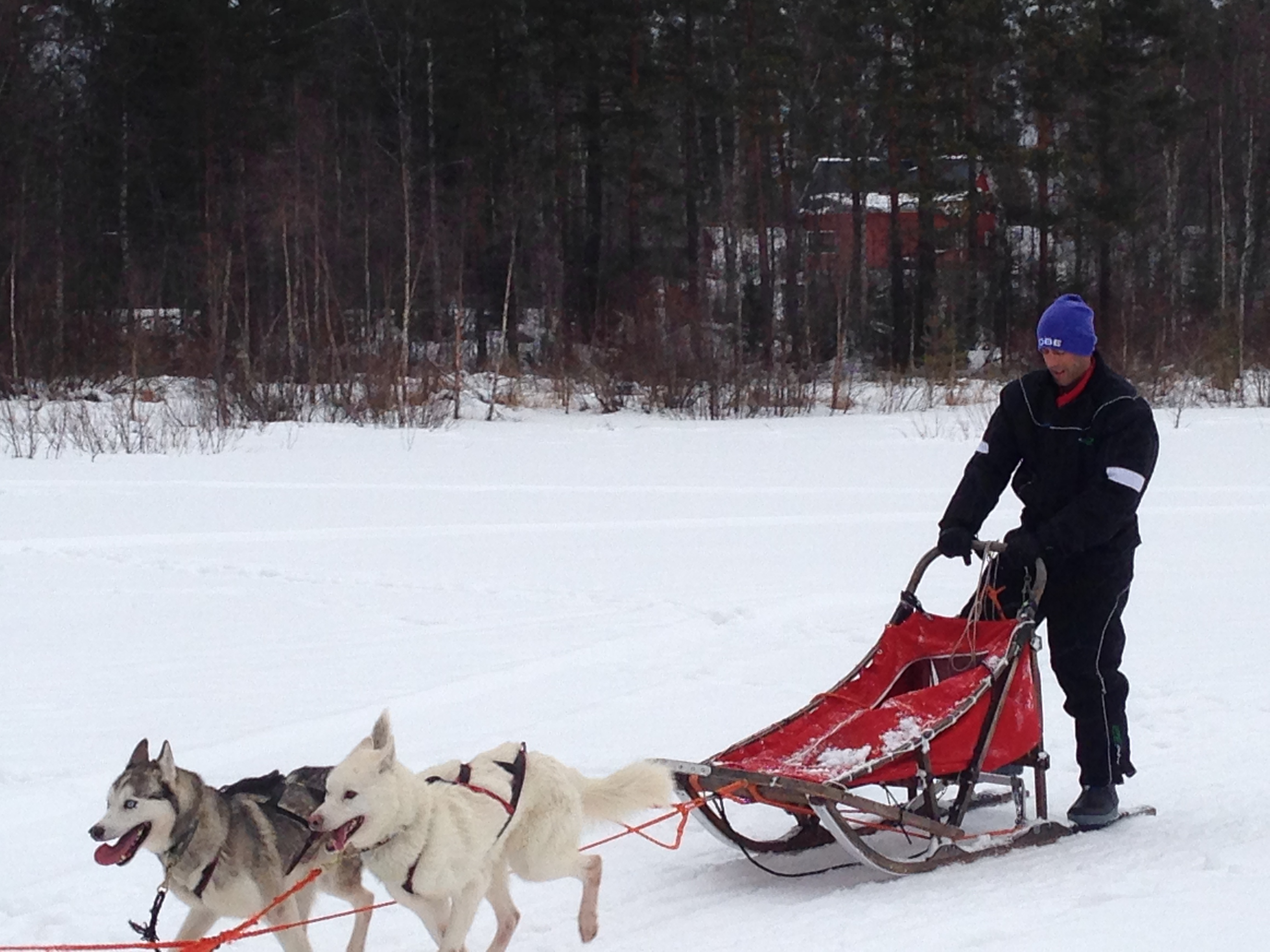 dog sledding8
