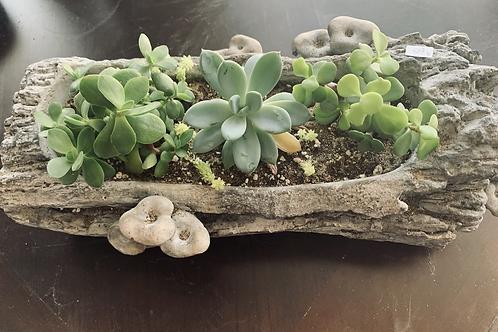 Succulent Pot 130x50 cm
