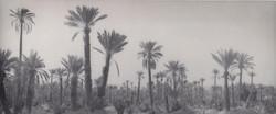 Palms_scan_Marrocco Kopie