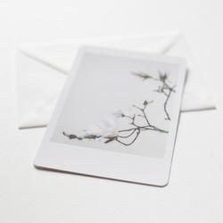 silke-lauffs-magnolia-days-3
