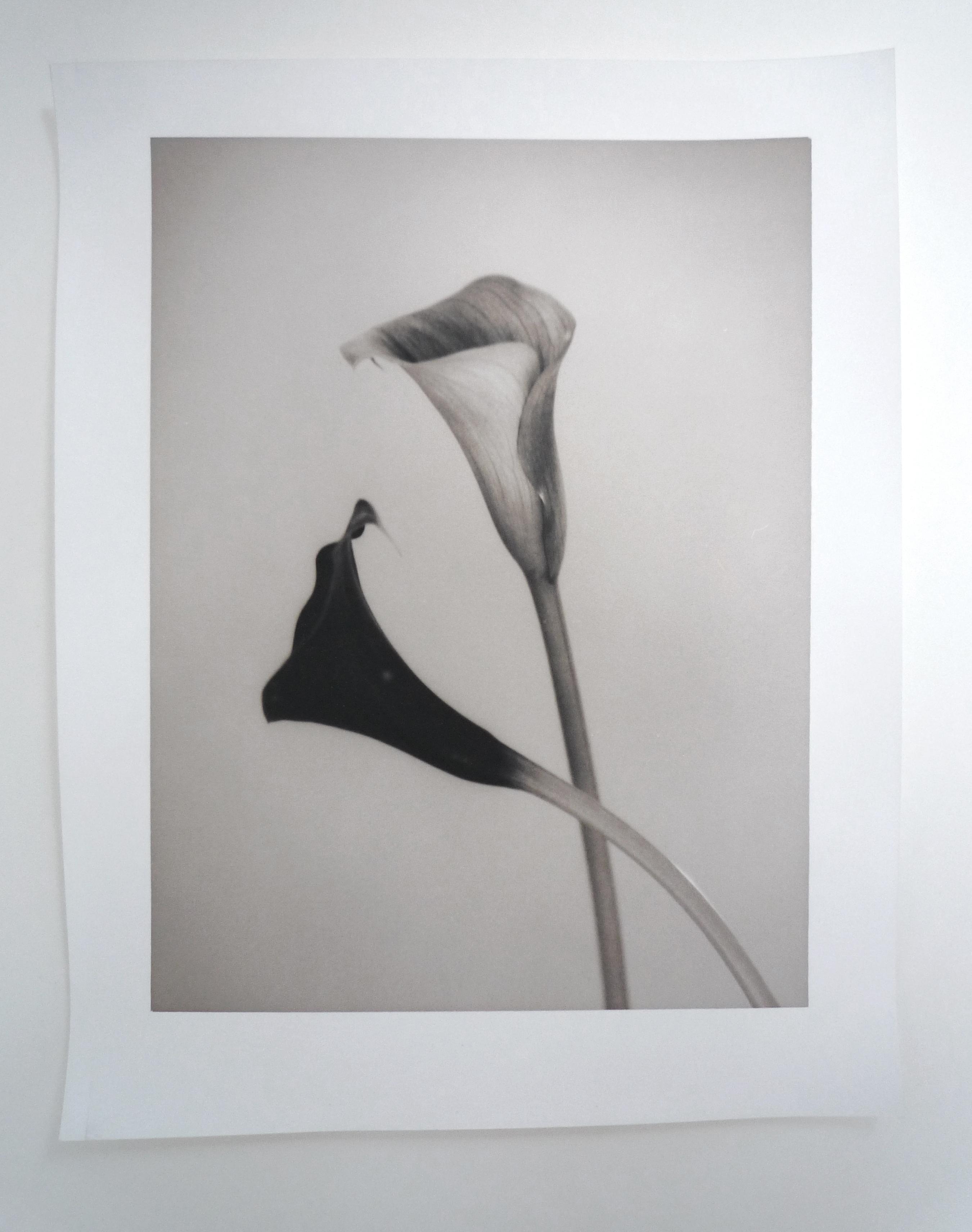 silke-lauffs-calla#2-sheet