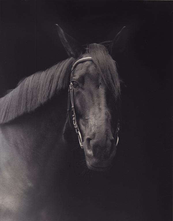 Horse Kopie