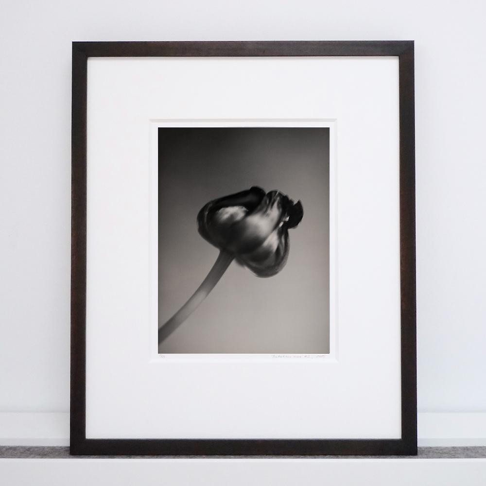 silke-lauffs-tulip-framed