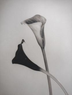 silke-lauffs-calla#2-image