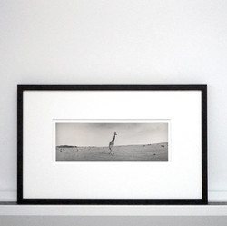 silke-lauffs-giraffe-framed