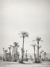 silke-lauffs-palmeraie-marrakech-morocco