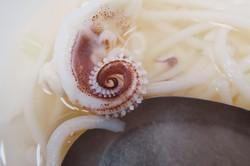 Fibonacci squid