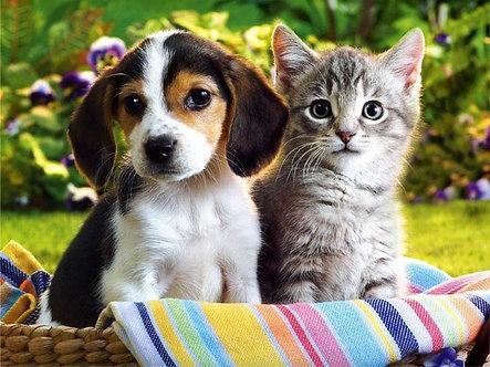 Beginners Animal Communication