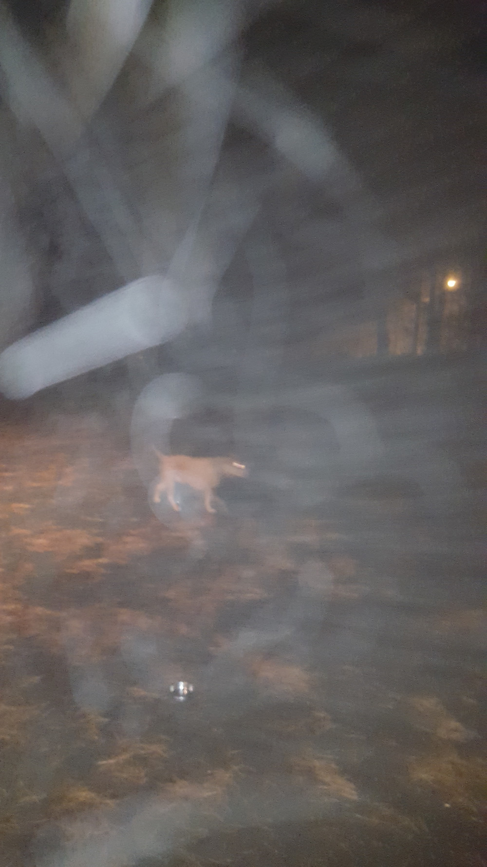 Orange -colored dog walking on a driveway in the night surrounded by white