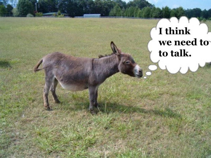 """Small brown donkey with bubble text that says, """"I think we need to talk."""""""