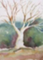 tree Yvonne Hauss