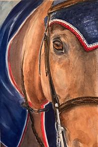 watercolor of show horse Yvonne haus