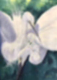 Snowy Egrets watercolor