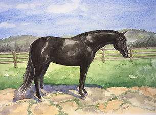 Escadrille watercolor black horse