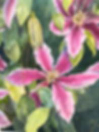 Garden Clematis watercolor Yvonne Haus