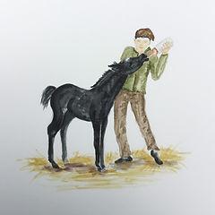 horse being fed.jpg